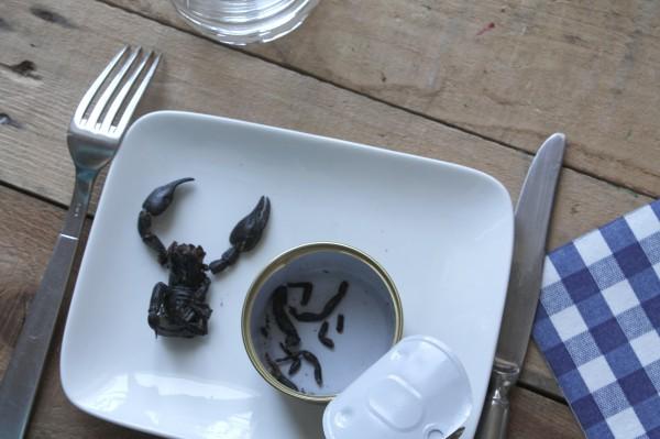 scorpion-a-manger3
