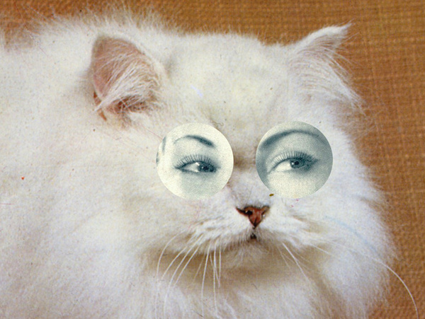 collage-chien-chat-13