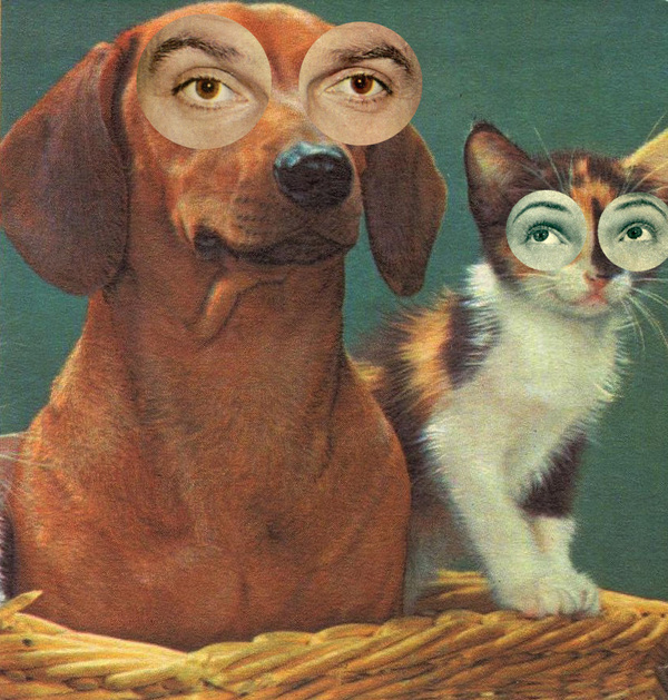 collage-chien-chat-20