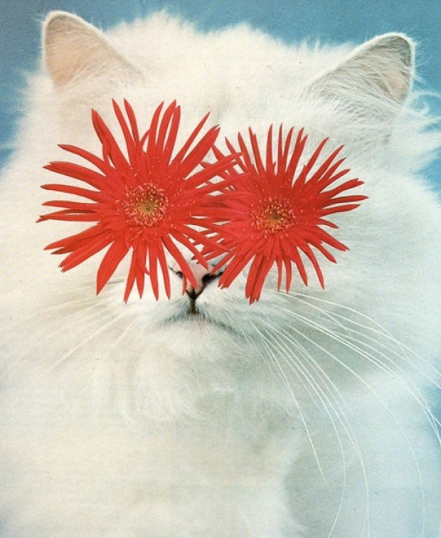 jour - Le WTF du jour Stephen-eichhorn-cats-and-plants-3