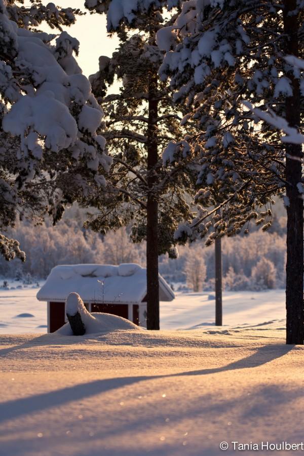borealis 4