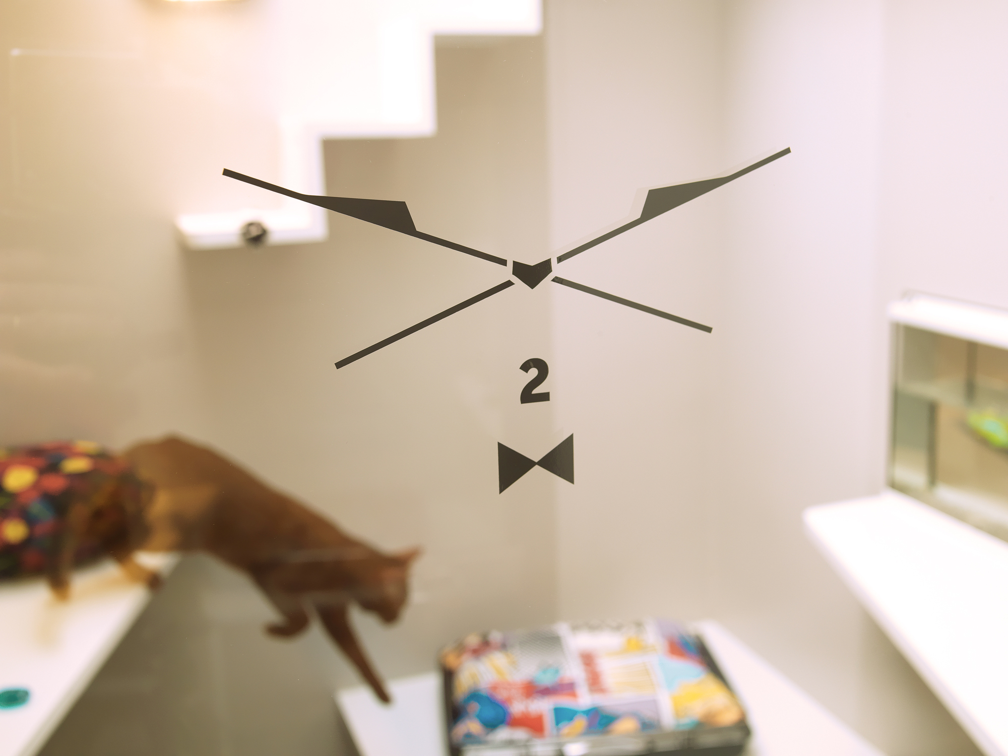 catsitter deedee. Black Bedroom Furniture Sets. Home Design Ideas