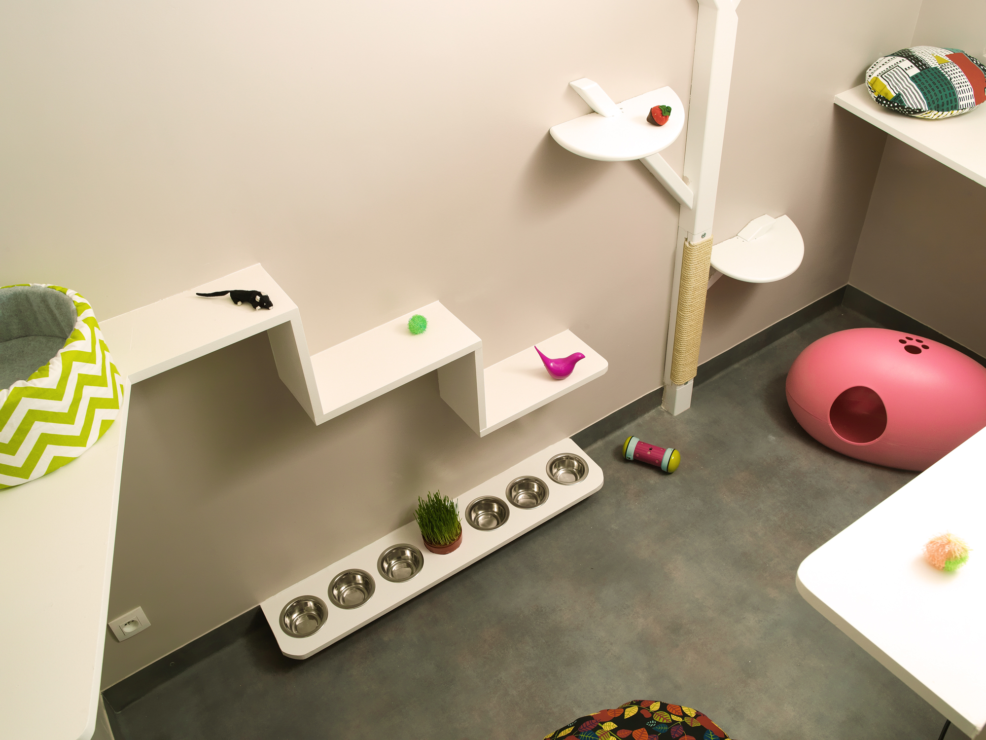 aristide le premier h tel pour chats paris deedee. Black Bedroom Furniture Sets. Home Design Ideas