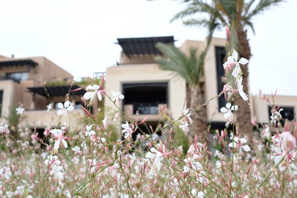 Royal-Palm-Marrakech-21