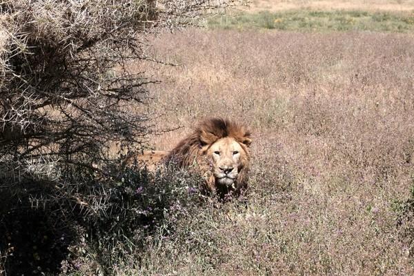 Tanzanie-Safari-jour-3-22