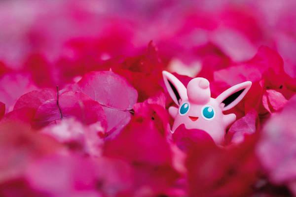 pokemon-photo-jules16-900x600