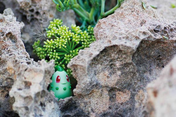 pokemon-photo-jules19-900x600